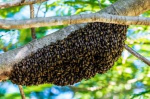 Online gemeinsam beten - Bienenschwarm